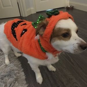 Other - 🐶Halloween Dog Outfit 🐶